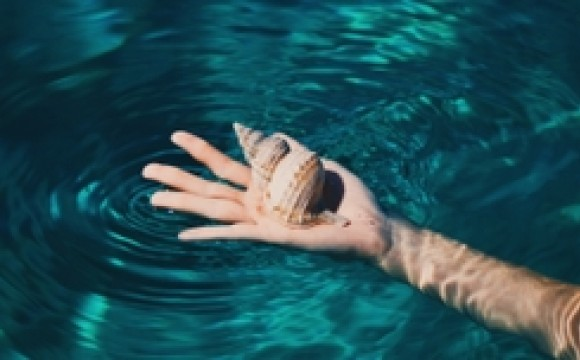 shell resting on hand in water